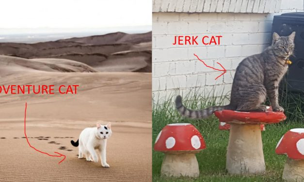 Got a cat who's not a total jerk? Train it to be an adventure cat