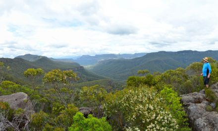 Mount Bushwalker Walking Track – Morton National Park – New South Wales (Bare Bones Bushwalking)