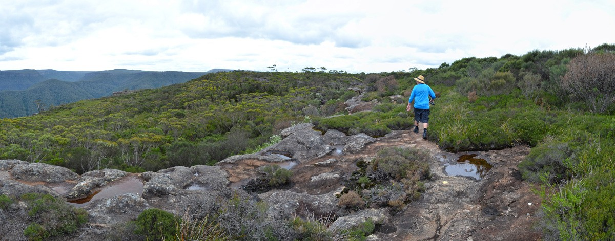Mount Bushwalker Walking Track - Morton National Park - New South Wales
