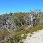 Gorge Heritage Walk – Mount Buffalo National Park – Victoria (Bare Bones Bushwalking)