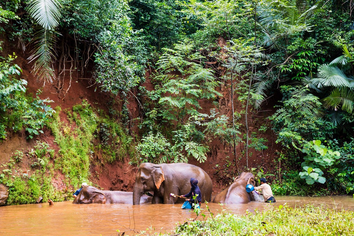 Trekking with elephants in eastern Cambodia