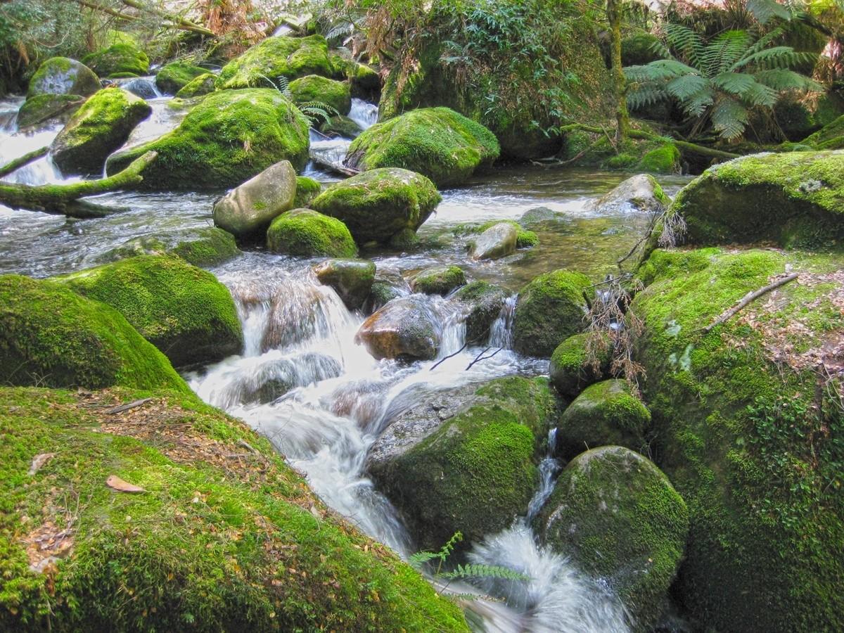 Beeches Rainforest Walk - Marysville - Victoria