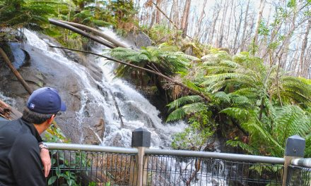 Phantom Falls – Lady Talbot Drive – Yarra Ranges National Park – Victoria