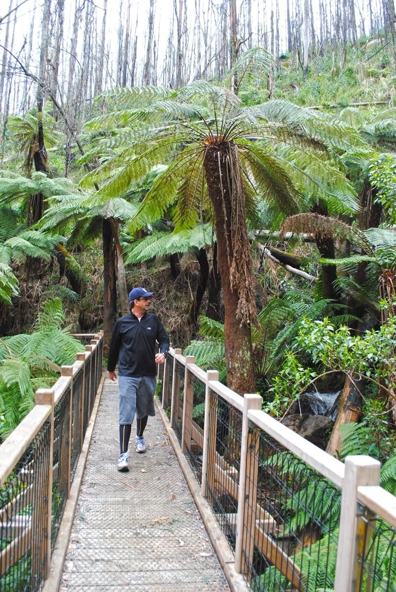Phantom Falls - Marysville - Victoria - Australia