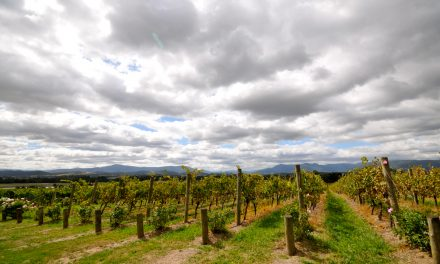 Melbourne's Yarra Valley region: The best walks and wineries