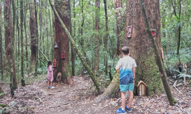 Forest Fairies at Otway Fly Treetop Walk bring some magic to the Otways