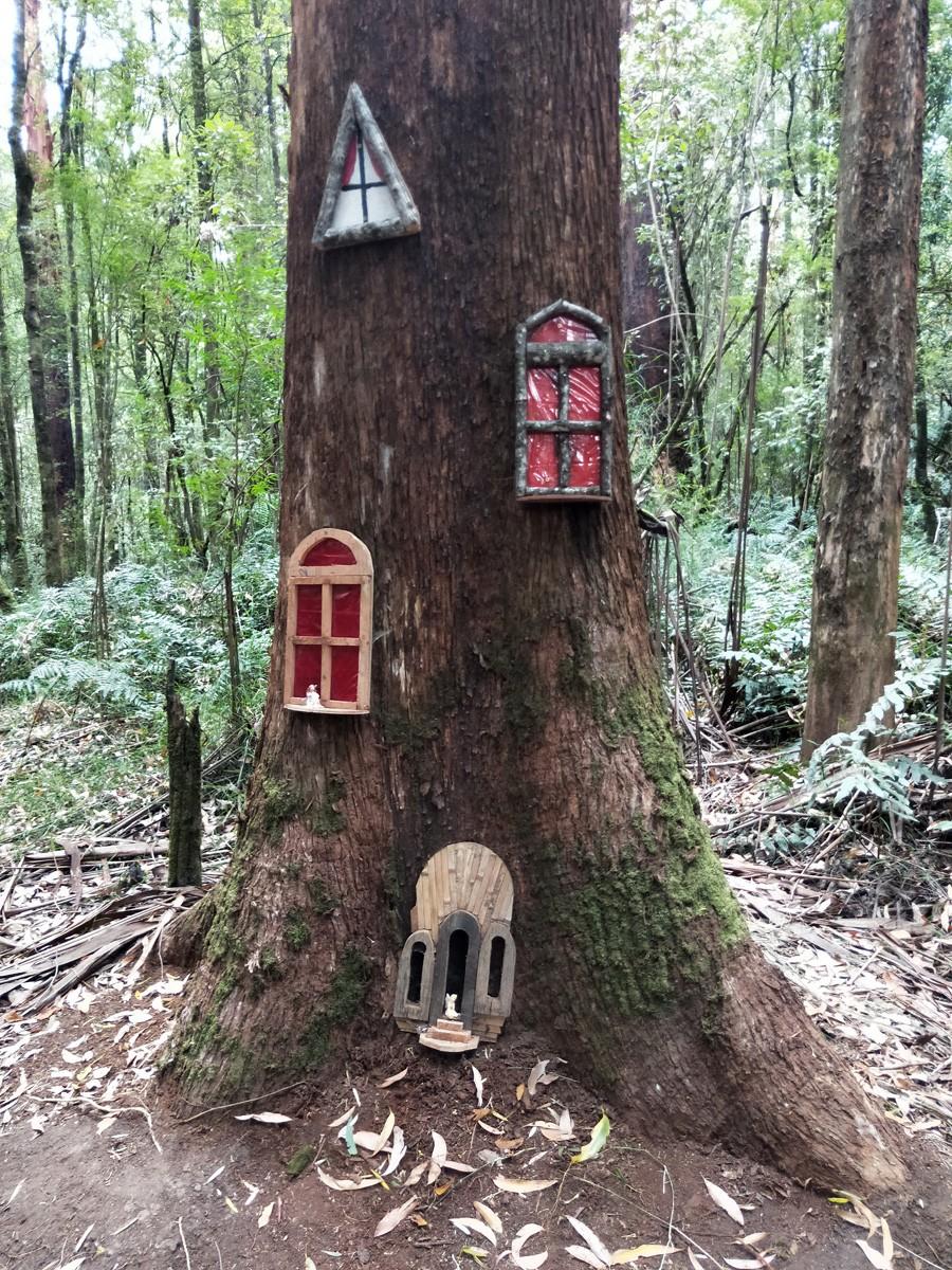 Otway Fly Fairies & Treetop Walk