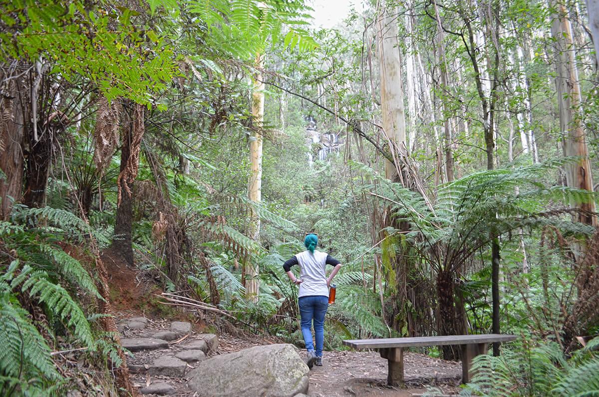 Toorongo Falls Circuit Walk - Toorongo Falls Reserve - Noojee - Victoria