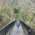 Living Bush Nature Walk – Dandenong Ranges National Park (Victoria)