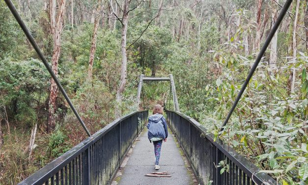 Living Bush Nature Walk – Dandenong Ranges National Park (Victoria)