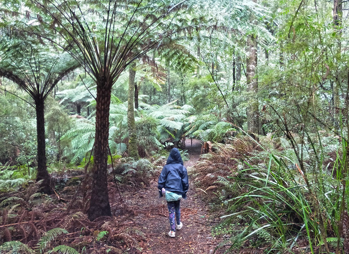 Living Bush Nature Walk - Dandenong Ranges National Park (Victoria)