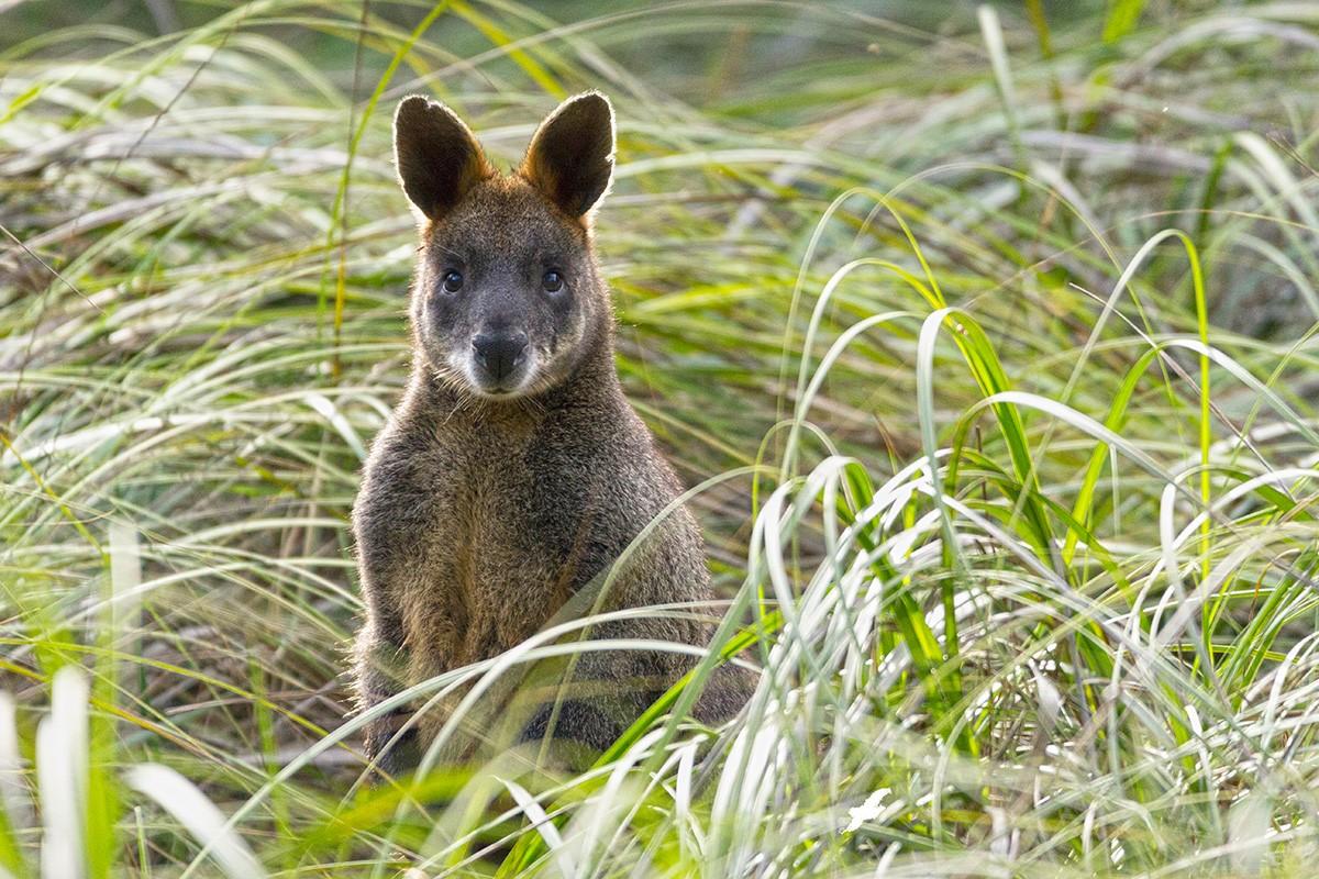 Pillar Point - Wilsons Promontory National Park - Victoria - Australia