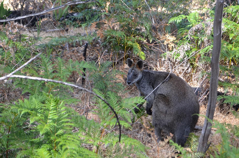 Ngamadjidj Shelter - Grampians National Park - Victoria - Australia