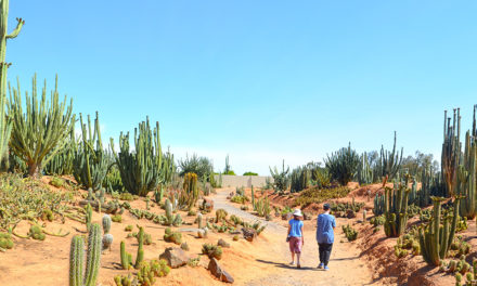 Cactus Country (Strathmerton, Victoria): Because what's better than giant cacti and margarita slushies?
