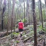 The hikes of Mount Disappointment State Forest (Victoria, Australia)
