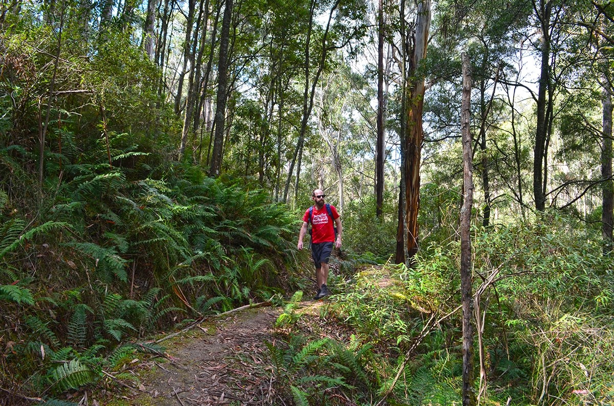 Whipstick Loop - Wombat State Forest (Blackwood, Victoria)