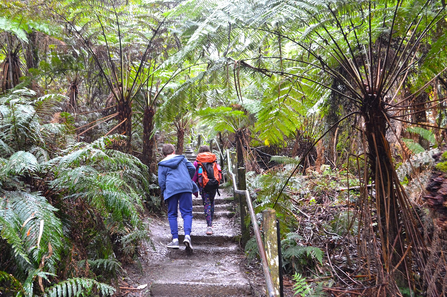 Kids on the 1000 Steps - Dandenong Ranges National Park