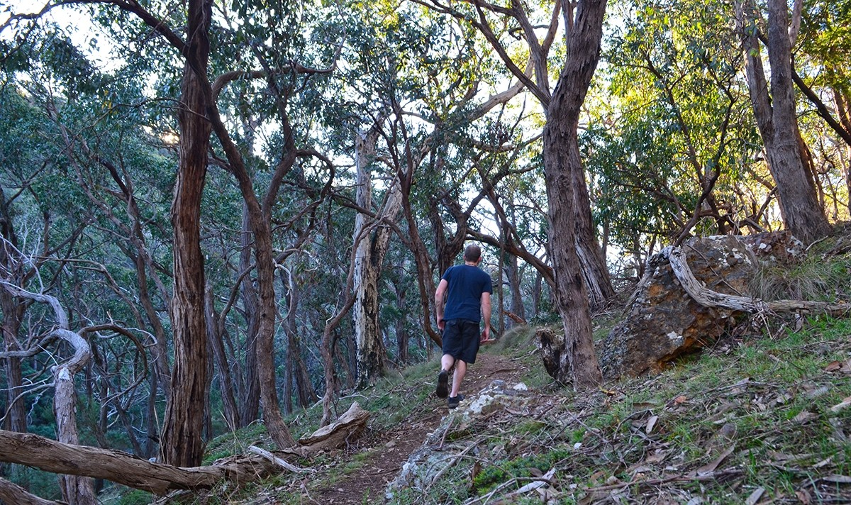 Conglomerate Gully Walking Track - Riddells Creek, Victoria