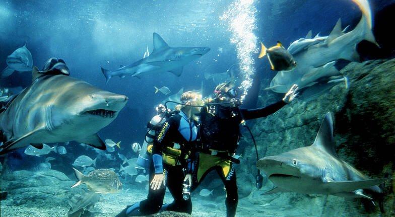 Diving with sharks - Melbourne Aquarium