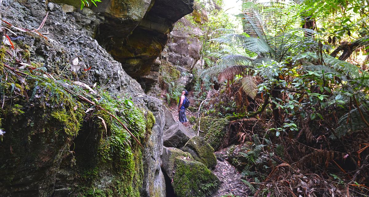 The Canyon Hike (aka Lorne Waterfalls Circuit) – Great Otway National Park, Lorne, Victoria