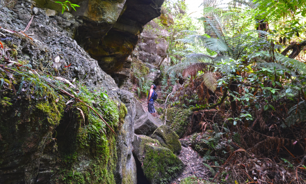 The Canyon Hike (aka Lorne Waterfalls Circuit) – Great Otway National Park, Lorne, Victoria